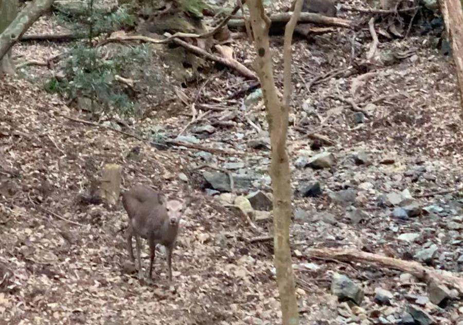 伊勢神宮で出会った鹿