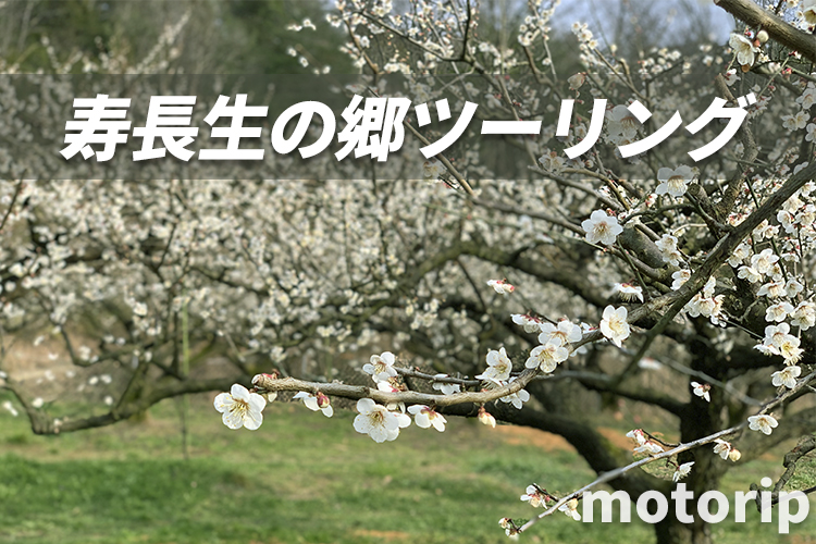 滋賀 寿長生の郷ツーリング|梅の名所で自然を感じながら絶品ランチ・カフェを味わおう!