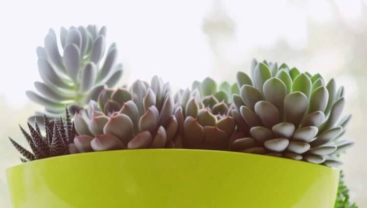多肉植物は日当たり・風通しの良い場所を好みます